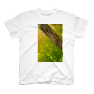 ククラスのワイルドベタ1 T-shirts
