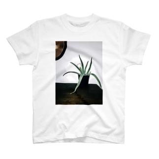 room T-shirts