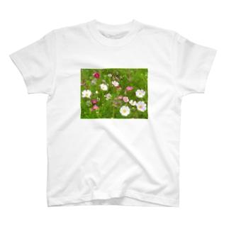 花模様  秋桜便り T-Shirt