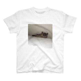 ピグミーオポッサム T-shirts