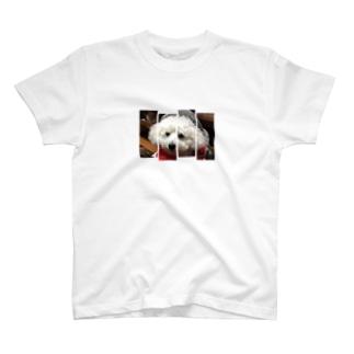 メイフラッグ T-shirts