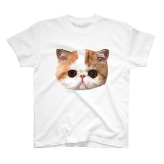 エキゾチックショートヘア T-shirts