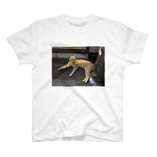 近所にいる猫ちゃん T-shirts