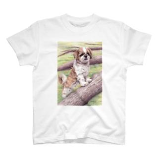 シーズー101 T-Shirt