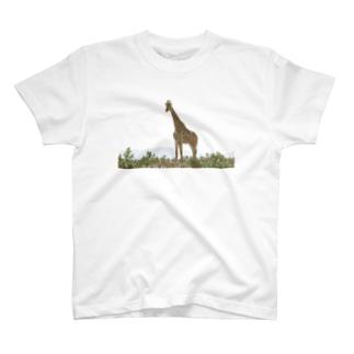 キリン T-Shirt