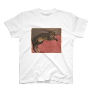Winter: Cat on a Cushion T-shirts