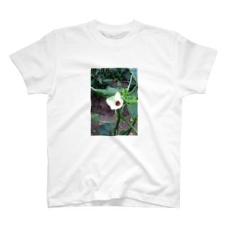 オクラの花🌼 T-shirts