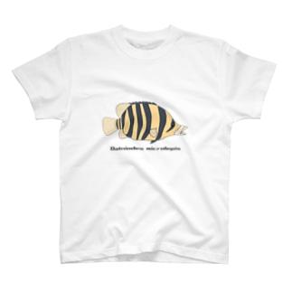 ダトニオ 捕食ver T-Shirt