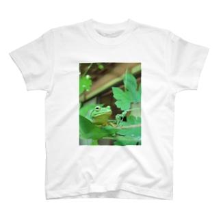 シュレーゲルのアオガエル T-shirts