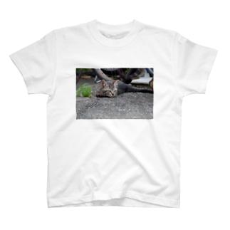 起きた野良ニャンコ T-Shirt