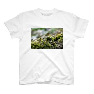 苔むした T-Shirt