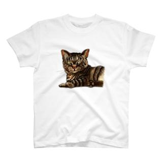 キジ柄の猫がこちらをみている T-Shirt