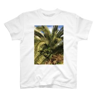 ソテツ T-shirts