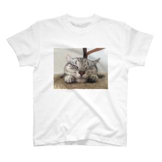 可愛いアメショ T-shirts