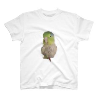 マメルリハのまめぞう T-shirts