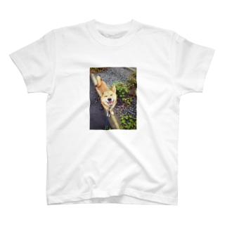 柴犬ご機嫌 T-shirts