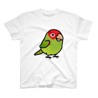 Chubby Bird オナガアカボウシインコ  T-shirts