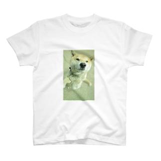 柴犬ライチ② T-shirts