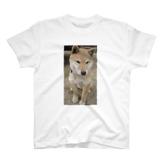 柴犬ライチ③ T-shirts