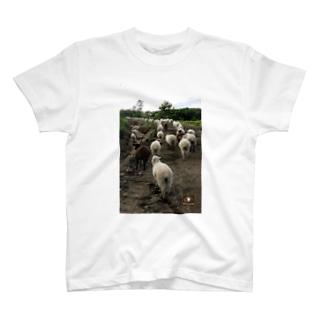 羊の行進 T-shirts