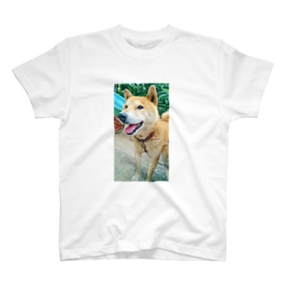柴犬ライチ⑤ T-shirts