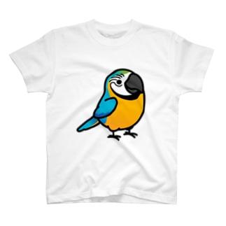 Chubby Bird ルリコンゴウインコ T-shirts