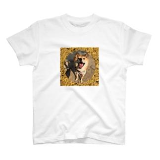柴犬コタロー T-shirts