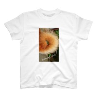 柴犬ライチ⑥ T-shirts