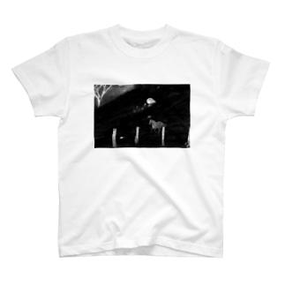 horse black Mountain T-shirts