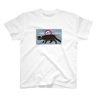 KEEP40IRIOMOTE水色 T-shirts