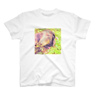 イヌ日向ぼっこ T-shirts