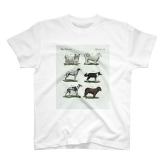 1802年ドイツの犬たち T-shirts