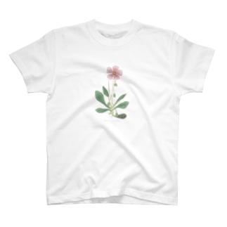 カランドリニア <アンティーク・ボタニカルアート> T-shirts