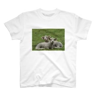 草原羊 T-shirts