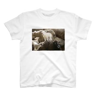 背中子羊 T-shirts