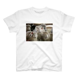 3匹の羊 T-shirts