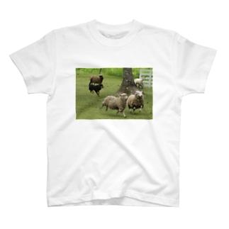 シープドッグショー T-shirts