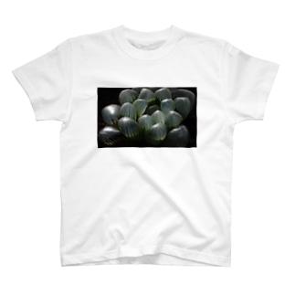 ハオルチア オブツーサ系4「ドドソン紫オブツーサ」 T-shirts