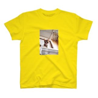 汝が子猫を覗く時、子猫もまた汝を覗いているのだ。 T-shirts