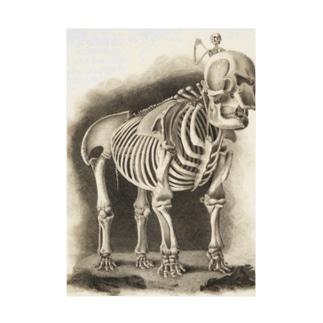 銅版画による人体骸骨 Stickable tarpaulin