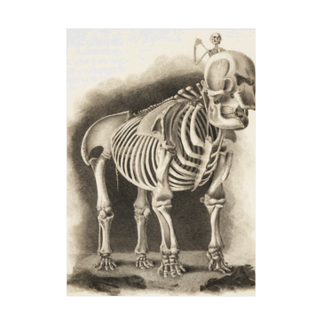 J. Jeffery Print Galleryの銅版画による人体骸骨 Stickable tarpaulin