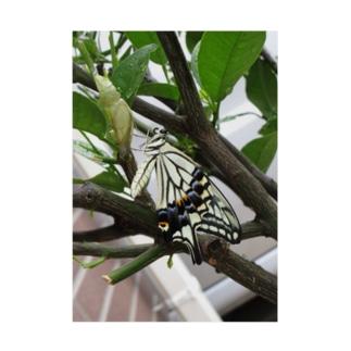 美しきアゲハ蝶 Stickable tarpaulin