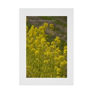 菜の花 春に佇む  Stickable poster