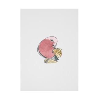 まめるりはことりのモモイロインコちゃんとトウモロコシ【まめるりはことり】 Stickable poster