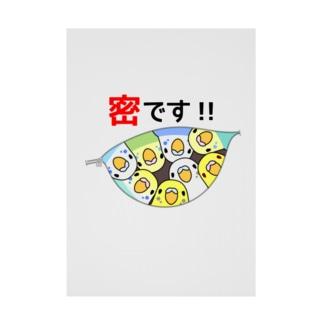 密です!セキセイインコさん【まめるりはことり】 Stickable poster