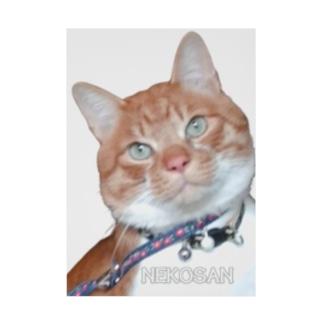 得意げ?猫さんプレーン Stickable poster