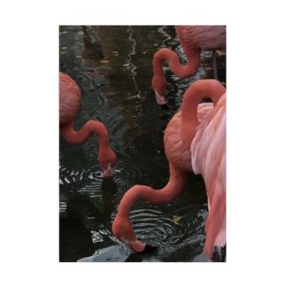 フラミンゴ Stickable poster