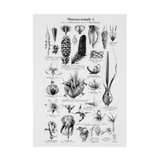植物の構造1 Stickable poster
