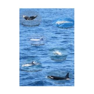 船上から見た鯨類(1) Stickable poster