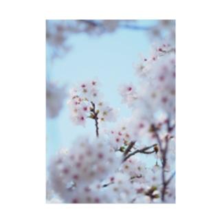 KOUTA TANIGUCHIのsakura2 Stickable poster